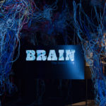 Mythbusters: The Brain Edition